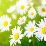 Festa da Primavera, participe!